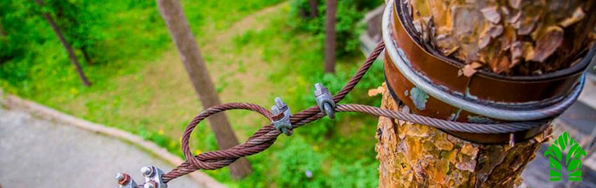 Укрепление деревьев (каблинг)