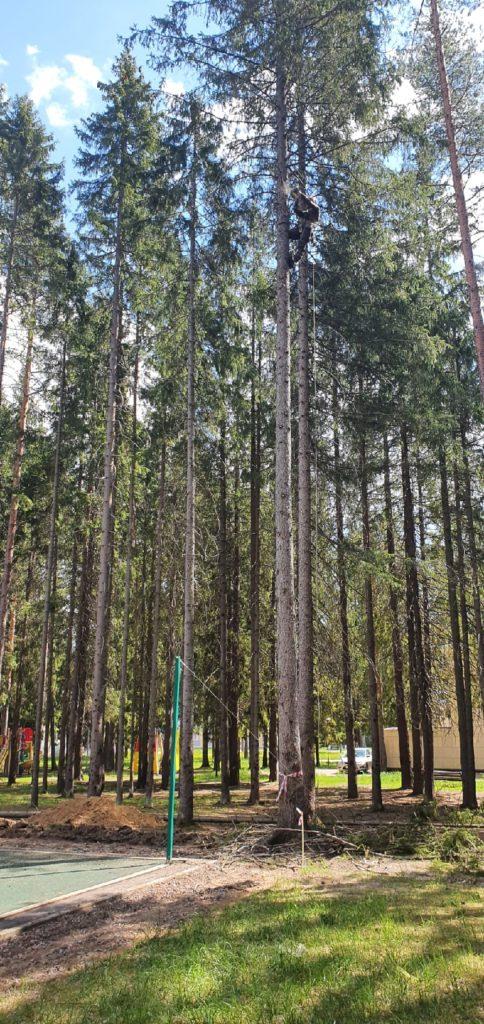 Вырубка деревьев в зеленогорске