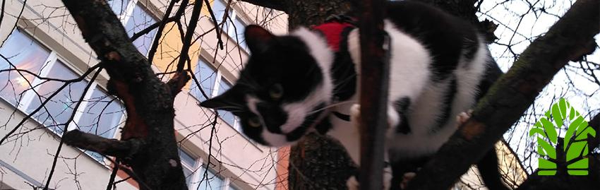 Снять кота с дерева